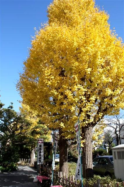 鎌倉IMG_0079.JPG