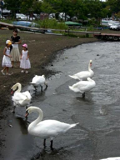 山中湖 010.jpg