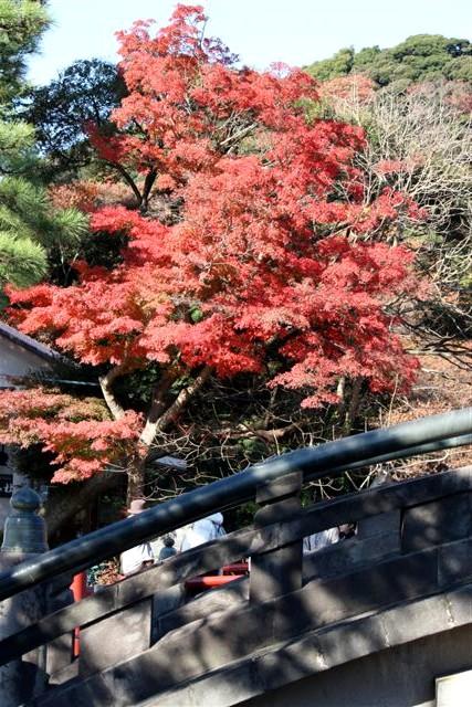 八幡宮IMG_0023.JPG