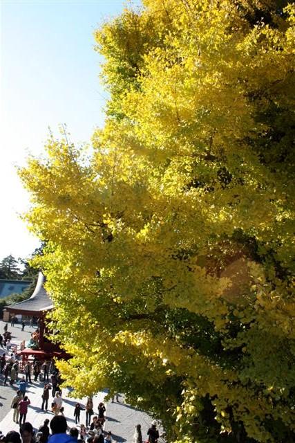 八幡宮IMG_0035 (10).JPG