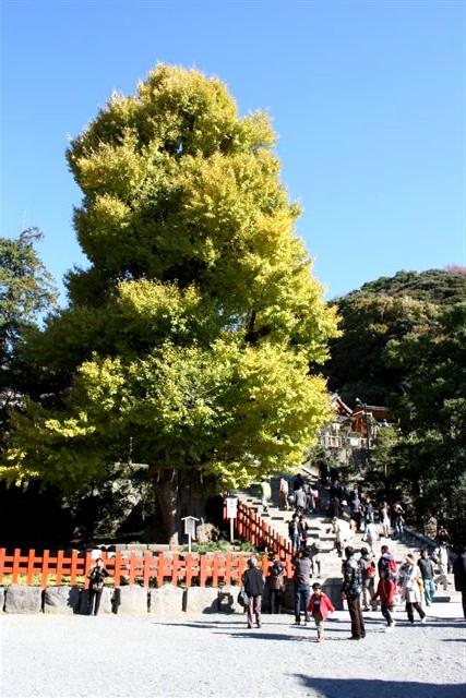 八幡宮IMG_0035 (12).JPG