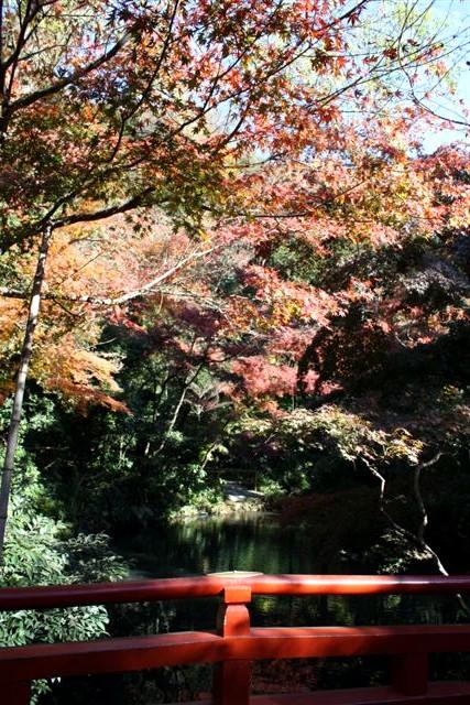 八幡宮IMG_0035 (13).JPG