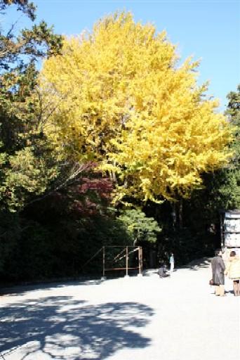 八幡宮IMG_0035 (5).JPG