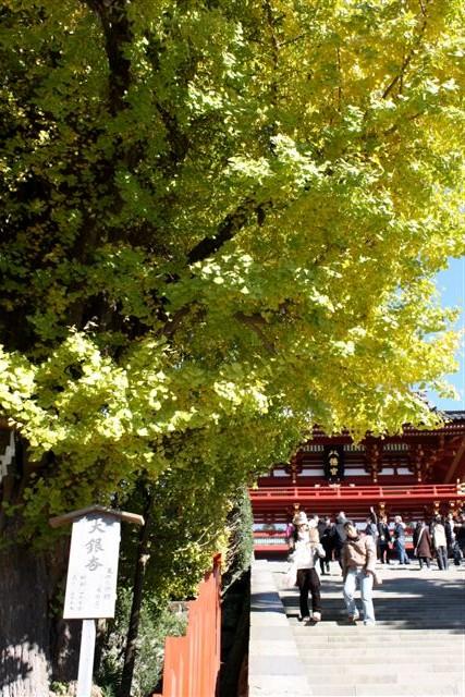 八幡宮IMG_0035 (9).JPG